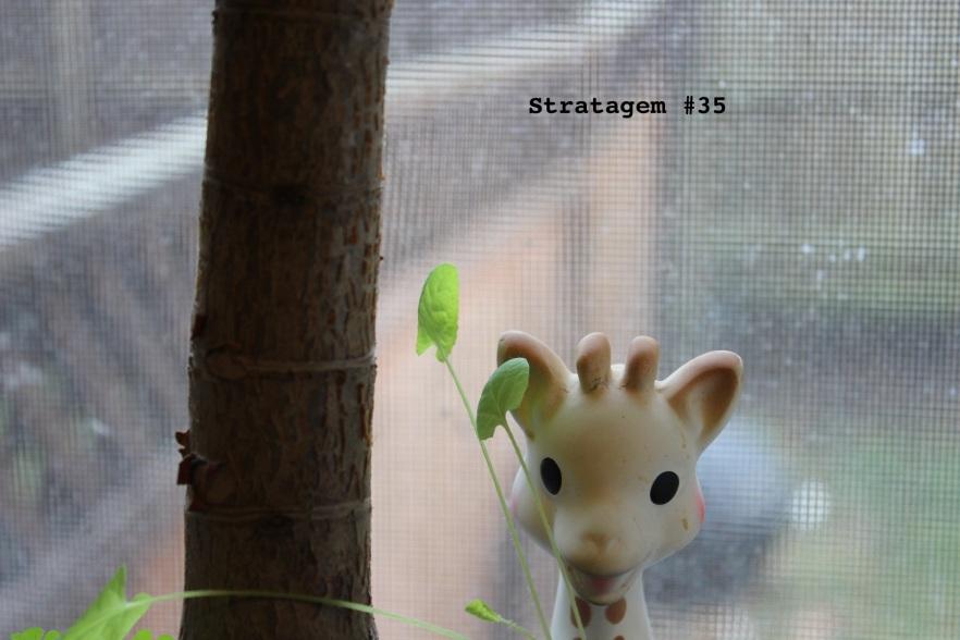 Stratagem 35